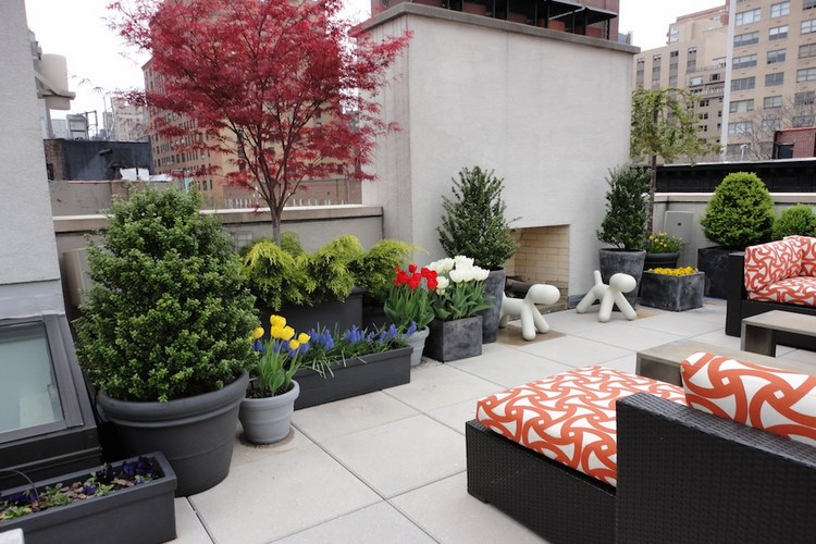 Thiết kế sân vườn mặt phố sạch sẽ